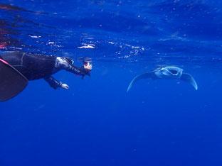 石垣島でのんびりダイビング「水面マンタ」ヒートハートクラブ