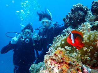 石垣島でのんびりダイビング「リフレッシュダイビング」ヒートハートクラブ