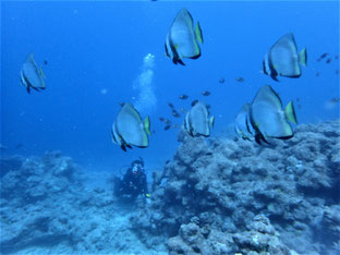 石垣島でのんびりダイビング「魚群」ヒートハートクラブ