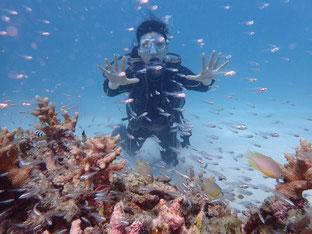 石垣島でのんびりダイビング「ブランクダイバー」ヒートハートクラブ