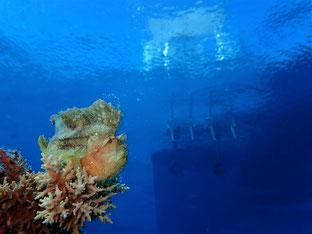 石垣島でのんびりダイビング「ベタ凪」ヒートハートクラブ