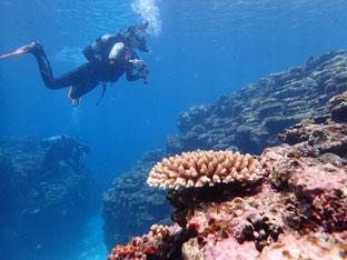石垣島でのんびりダイビング「石西礁湖」ヒートハートクラブ