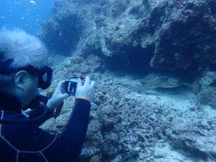 石垣島でのんびりダイビング「コンデジ水中撮影」ヒートハートクラブ