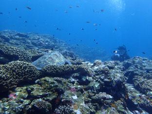 石垣島でのんびりダイビング「目指さフォトコン」ヒートハートクラブ