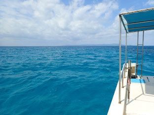 石垣島でのんびりダイビング「コブシメに遭遇」