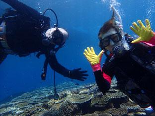 石垣島でのんびりダイビング「石垣島ダイブ」ヒートハートクラブ