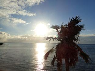 石垣島でのんびりダイビング「初潜り」ヒートハートクラブ