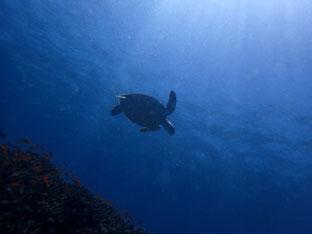 石垣島でのんびりダイビング「フイルムカメラに挑戦」ヒートハートクラブ