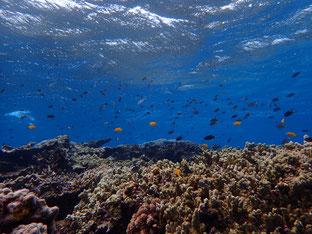 石垣島でのんびりダイビング「名蔵湾でダイビング」