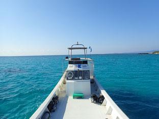 石垣島でのんびりダイビング「夏の日差し」