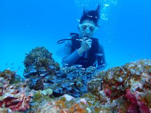 石垣島でのんびりダイビング「冬の石垣島」