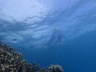 石垣島でのんびりダイビング「晴の気配」ヒートハートクラブ