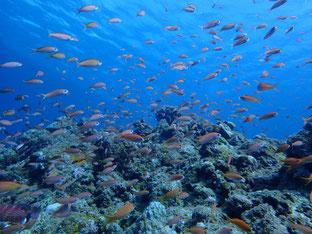 石垣島でのんびりダイビング「フレンドリーな生き物たち」ヒートハートクラブ