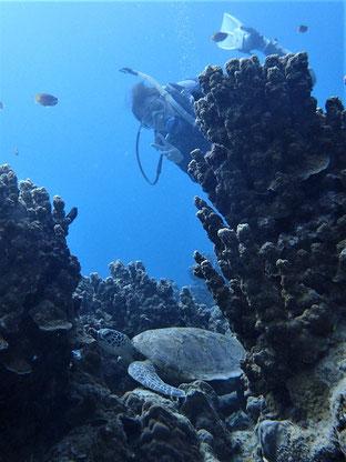 石垣島でのんびりダイビング「子亀さん」ヒートハートクラブ