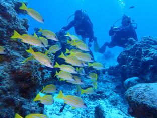 石垣島でのんびりダイビング「📷水没」ヒートハートクラブ