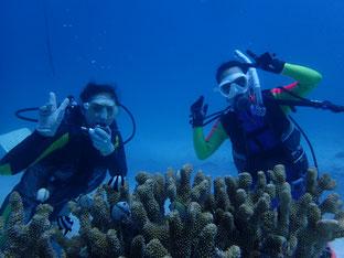 石垣島でブランクダイビング「のんびりダイビング」ヒートハートクラブ