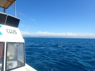 石垣島でのんびりダイビング「空の青っていいね!」ヒートハートクラブ