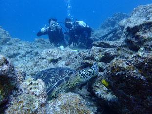 石垣島でのんびりダイビング「3度目の体験ダイビング」ヒートハートクラブ