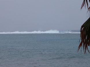 石垣島でのんびりダイビング「約10日間」ヒートハートクラブ