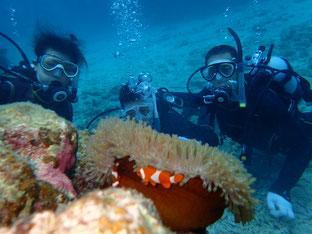 石垣島でのんびりダイビング「夏休み最終章」ヒートハートクラブ