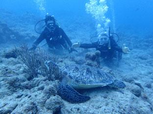 石垣島でのんびりダイビング「アオウミガメ」