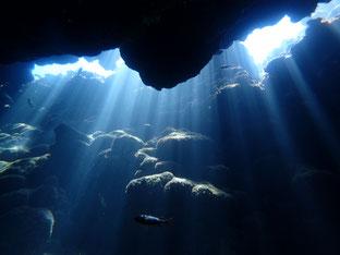 石垣島でのんびりダイビング「光のカーテンに包まれ」ヒートハートクラブ