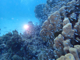 石垣島でのんびりダイビング「ダイブトリップ」ヒートハートクラブ