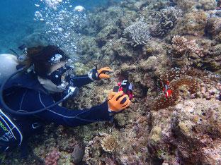 石垣島でのんびりダイビング「水中写真に夢中」ヒートハートクラブ