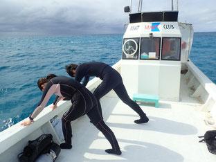 石垣島でのんびりダイビング「準備体操」ヒートハートクラブ