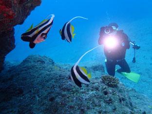 石垣島でのんびりダイビング「屋良部崎」ヒートハートクラブ