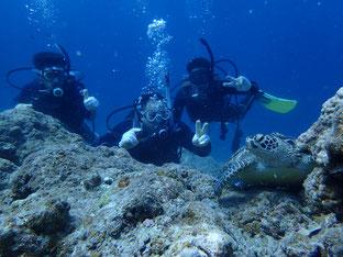 石垣島でのんびりダイビング「ベテラン体験ダイバー」ヒートハートクラブ