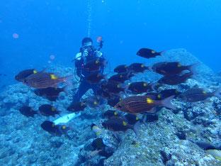 石垣島でのんびりダイビング「魚群に囲まれ」ヒートハートクラブ