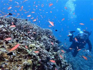 石垣島でのんびりダイビング「5日目のダイビング」ヒートハートクラブ