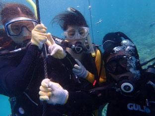 石垣島でのんびりダイビング「夏休み第二弾」ヒートハートクラブ