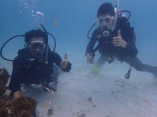 石垣島でのんびりダイビング「リフレッシュダイバー」ヒートハートクラブ
