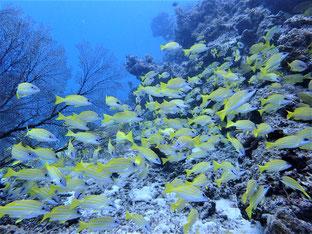 石垣島でのんびりダイビング「地元ダイバー」ヒートハートクラブ