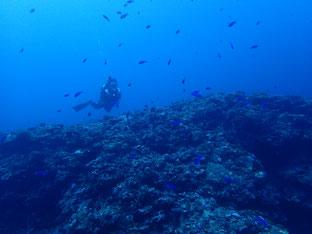 石垣島でのんびりダイビング「クジラの歌声」ヒートハートクラブ