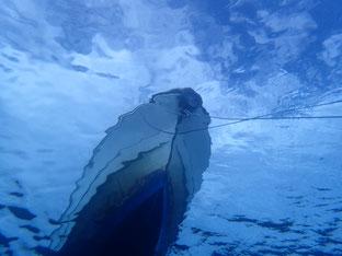 石垣島でのんびりダイビング「ラッキーガール」ヒートハートクラブ