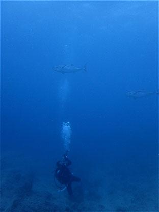 石垣島でのんびりダイビング「まぐろ祭り」ヒートハートクラブ
