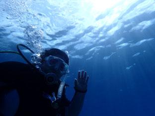 石垣島でのんびりダイビング「体験ダイバー」ヒートハートクラブ