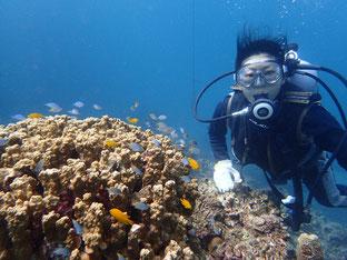 石垣島でのんびりダイビング「小浜島から」ヒートハートクラブ