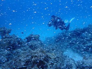 石垣島でのんびりダイビング「台風一過」ヒートハートクラブ