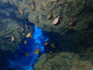 石垣島でのんびりダイビング「休み明け」ヒートハートクラブ