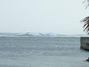 石垣島でのんびりダイビング「波浪警報」ヒートハートクラブ
