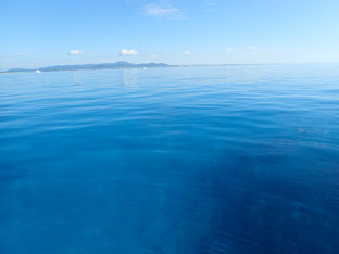 石垣島でのんびりダイビング「ツルべた」ヒートハートクラブ