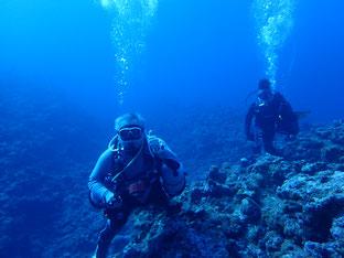 石垣島でのんびりダイビング「大きなイソマグロに遭遇」ヒートハートクラブ
