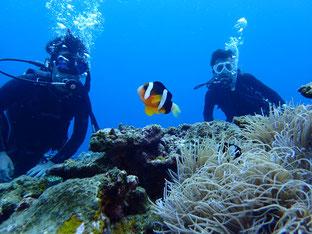石垣島でのんびりダイビング「親子でダイブ」ヒートハートクラブ