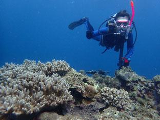 石垣島で初心者ダイビング「珊瑚と私」ヒートハートクラブ