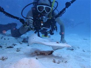 石垣島でのんびりダイビング「ニコノスⅤ」ヒートハートクラブ