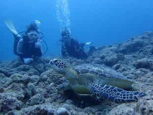 石垣島でのんびりダイビング「念願のウミガメに遭遇」ヒートハートクラブ